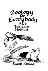 Zoology for Everybody No 6 Tunicates & Molluscs